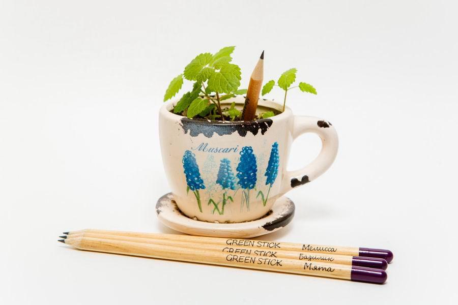 Растущие карандаши «Пряные травы», набор 3 шт. купить Минск