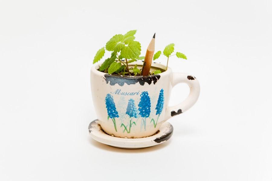 Растущие карандаши «Цветущий сад», набор 6 шт., цветные купить Минск