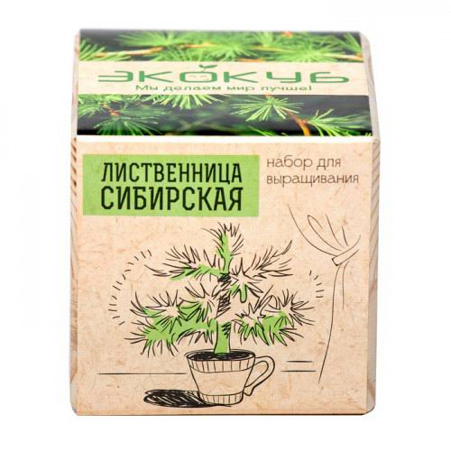 ekokub-listvennitsa-sibirskaya-2