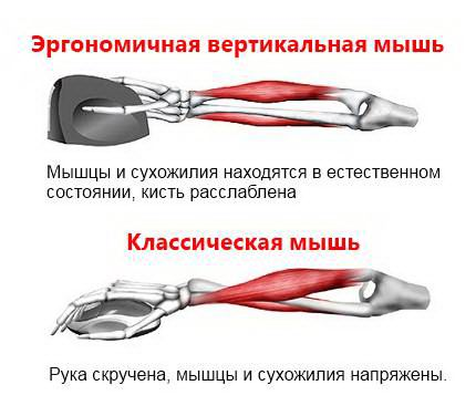 mysh-kompyuternaya-vertikalnaya-6