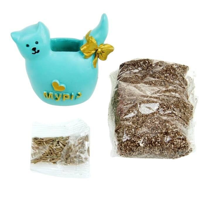 растущая трава с вазоном котик купить