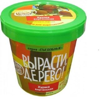 Набор «Вырасти дерево!» хурма виргинская купить в Минске +375447651009