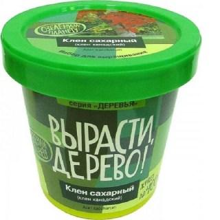 Набор «Вырасти дерево!» клен сахарный купить в Минске +375447651009