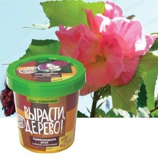 Набор «Вырасти дерево!» Роза Сумасшедшая купить в Минске +375447651009