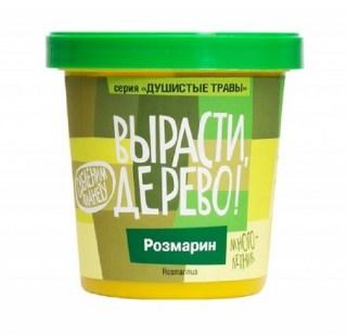 Набор «Вырасти дерево!» розмарин купить в Минске +375447651009