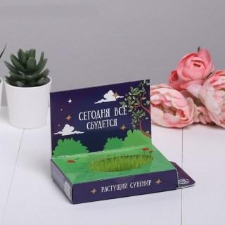 Открытка-растущая трава «Мечтай!» купить в Минске +375447651009