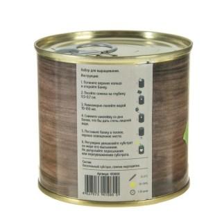Растение в консервной банке «Маргаритка» купить в Минске +375447651009