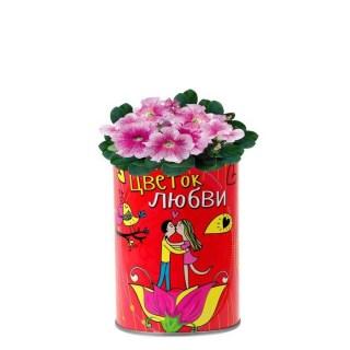 растущая трава цветок любви в банке купить