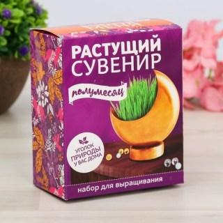 Растущая трава с вазоном «Луна» купить в Минске +375447651009