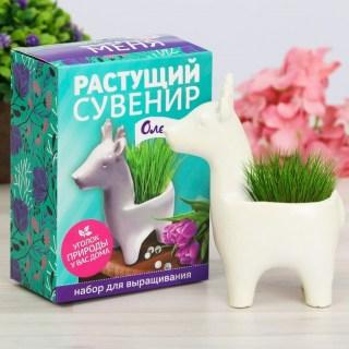 Растущая трава с вазоном «Олененок» купить в Минске +375447651009