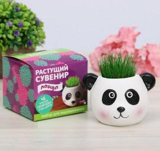 Растущая трава с вазоном «Панда» купить в Минске +375447651009