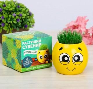 Растущая трава в вазоне «Смайлик» купить в Минске +375447651009