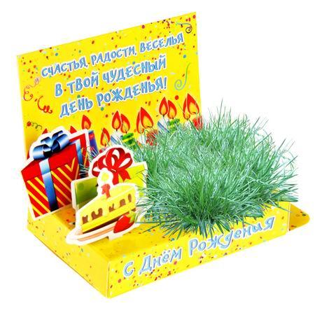 Открытка-растущая трава «С Днем Рождения» Минск