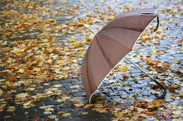 зонтик осенью в подарок